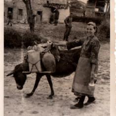 Fotografie - Magar pentru Aprovizionarea Armatei Germane