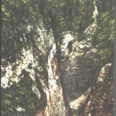 Ilustrata Transilvania ZARNESTI edit 1913 necirculata RARA