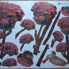 Sticker - autocolant de perete, Crenguta cu buchete de flori roz