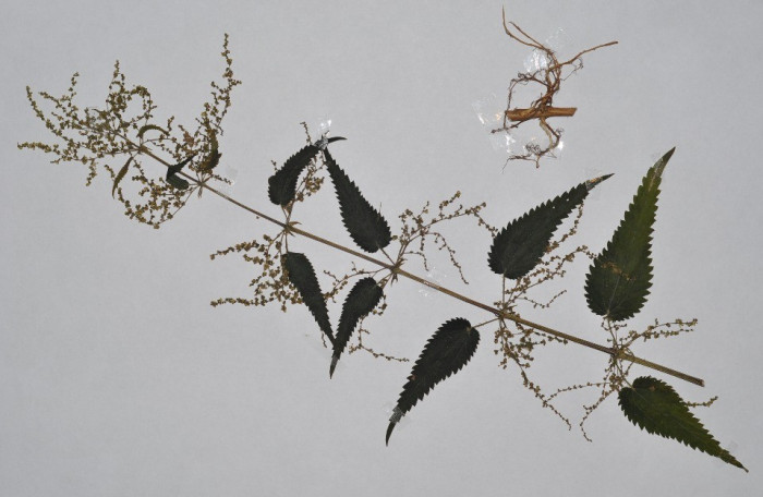Plante pentru ierbar foto mare