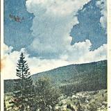 Carti Postale Romania dupa 1918 - RPR, CP circulata 1954, Poiana Tapului, vedere spre Zanoaga