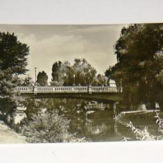 Carte postala - ilustrata - ARTA - NATURA - RAU - TIMISOARA - BEGA - necirculata - anii 1950-1970 - 2+1 gratis toate produsele la pret fix - RBK4735 - Carte Postala Banat dupa 1918, Fotografie
