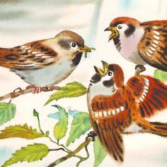 Carte postala tematica - Fauna - Pasari - Vrabie de casa
