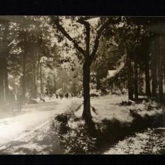 Carti Postale Romania dupa 1918 - RPR - Baile Moneasa - Vedere din parc