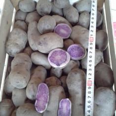 Cartofi mov, Vitelotte