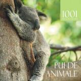Caine - Pui de animale