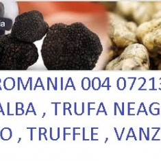 Trufe proaspete de vanzare Tartufi Trufle Traffel Trufe Negre si Albe Bucuresti - Fructe