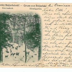 556 - Litho, Caras, ANINA, Rezervatia de caprioare - old postcard - used - 1899 - Carte Postala Banat pana la 1904, Circulata, Printata