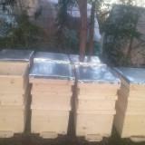 stupi de albine