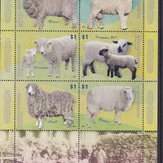 Fauna, animale domestice, oi, Argentina. - Timbre straine, Nestampilat