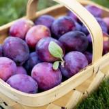 Palinca de prune (tuica)