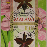 Colita flori Malawi 2010 (277)